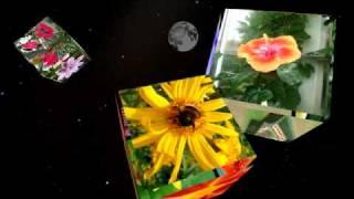 getlinkyoutube.com-Sony Vegas Pro 10 - Cube Box rotation - Spring is coming - Flowers