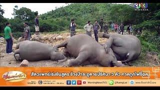 getlinkyoutube.com-เรื่องเล่าเช้านี้ สัตวแพทย์เร่งชันสูตร ช้างป่าละอูตายปริศนา 3 ตัว คาดถูกไฟช็อต (16 ก.ค.58)