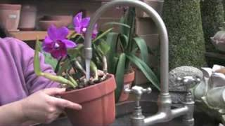 getlinkyoutube.com-Sonia's Garden — Basic Orchid Care