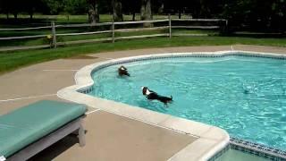 getlinkyoutube.com-The Ladies Swim Season 2: Just toss em in