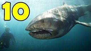 getlinkyoutube.com-10 สัตว์น้ำที่น่าสะพรึงกลัว ราวกับสัตว์ประหลาด!!