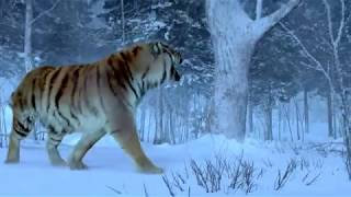getlinkyoutube.com-The Taking Of Tiger Mountain-The Best Tiger Scene