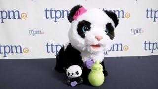 getlinkyoutube.com-FurReal Friends Pom Pom My Baby Panda from Hasbro