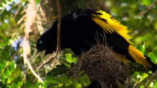 getlinkyoutube.com-NAT GEO WILD HD (LIVING MUSIC ACTION) 2012