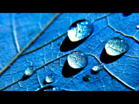 Natures Sounds Rain with Thunder - 15 Minutes Without Music