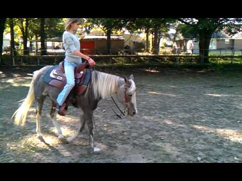 Western Pleasure Pony for Sale