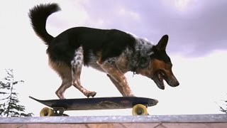 Epic Parkour Dog