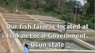 getlinkyoutube.com-Piggery and Catish Farm in Nigeria 1.MPG