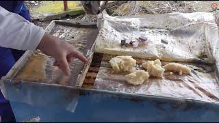 getlinkyoutube.com-Iernarea familiilor de albine in folie dubla - Hranirea stimulativa cu miere cristalizata si polen