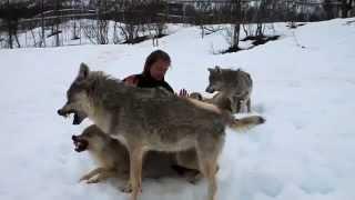 getlinkyoutube.com-طرائـف الحيوان مع الانسان -07 Beast Supercut Compilation