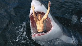 getlinkyoutube.com-11 Amazing Shark Facts