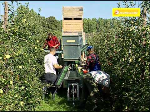 Pluk -O- Trak Senior & Junior