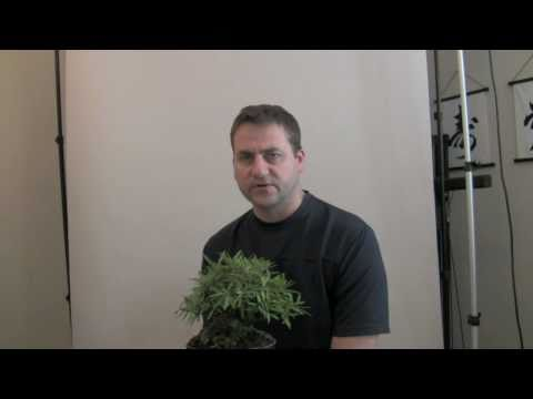 How to Bonsai soil - why use bonsai soil
