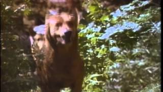 The Pack Trailer 1977