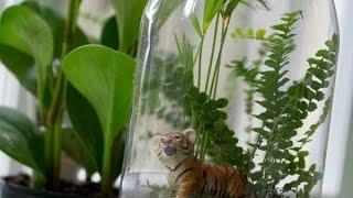 getlinkyoutube.com-Rainforest in a Bottle