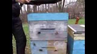 getlinkyoutube.com-Безсотовая зимовка на закристаллезованном меде.