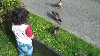 getlinkyoutube.com-Enten füttern , ördeklere ekmek