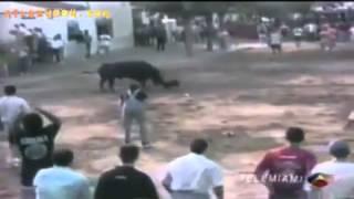 getlinkyoutube.com-أشرس كلب فى العالم البول ترير يهاجم ثور - سبحان الله