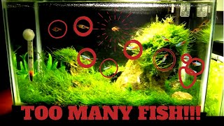 getlinkyoutube.com-5 Gallon Tank: Too Many FIsh