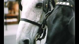getlinkyoutube.com-Ένα όμορφο αμάξι με δυο άλογα _ Γρηγόρης Μπιθικώτσης
