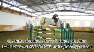 getlinkyoutube.com-3. CLARIMO X CORIOLAN (HORSES FOR SALE)