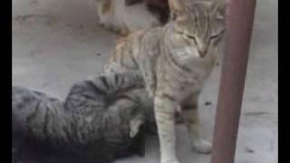 SEXY CAT3
