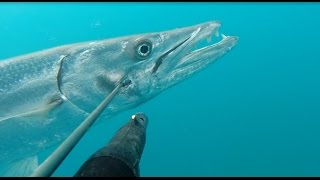 getlinkyoutube.com-Spearfishing BIG BARRACUDA 22 kg. Барракуда 22 кг.