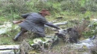 getlinkyoutube.com-Monterias - Videos de caza mayor  - Todo Jabalí - parte 3