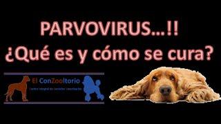 getlinkyoutube.com-¿Que es el Parvovirus y como se cura?