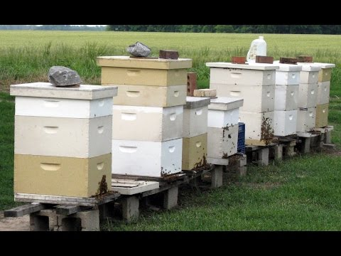 Beekeepers' BeeHive Feeder Bandit Video- Hard to Catch Raccoon