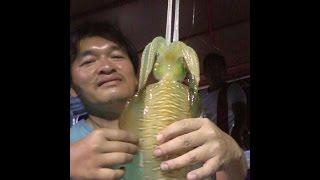 getlinkyoutube.com-ตกหมึกแล้วกินหมึกสด แบบซาซิมิหมึก Squid fishing and eat Squid sashimi