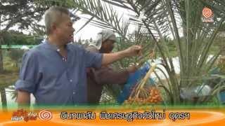 getlinkyoutube.com-อินทผาลัม พืชเศรษฐกิจตัวใหม่ อุดรฯ