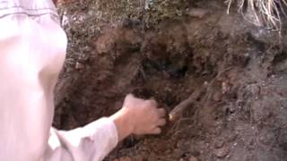 getlinkyoutube.com-Digging Colorado Smoky Crystals