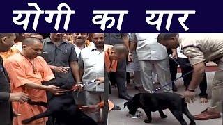 Yogi Adityanath's dog 'Kaalu' greets him in Gorakhpur, Watch  video | वनइंडिया हिंदी