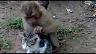 getlinkyoutube.com-(Videos Engraçados de Animais) Macaco que Pensa que o Gato é seu Animalzinho de Estimação