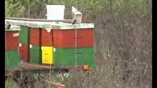 getlinkyoutube.com-my bees -pčele