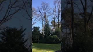 Spectaculaire beelden: man redt poes uit metershoge boom