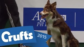 getlinkyoutube.com-Agility - Championship Final | Crufts 2015