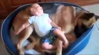 getlinkyoutube.com-หมากับเด็ก น่ารักๆ