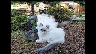 Laid-Back Cat vs Energetic Kitten