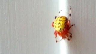 getlinkyoutube.com-Spider Touch