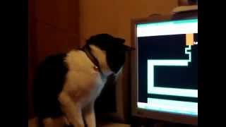getlinkyoutube.com-gato entretenido sige el punto rojo del exorsista