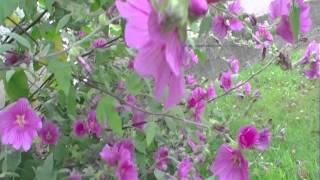 Bumblebee Video 6