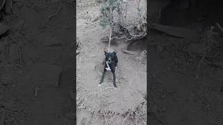 Funny dog with sexy girl Latest Funny 2016