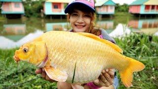 getlinkyoutube.com-ฺBeautiful carp in pond fishing ชิงหลิวตอนที่1 พิชิตปลาไนสีทอง by Mayme