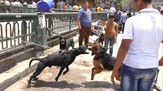 """getlinkyoutube.com-""""سوق الجمعة"""".. تاجر: الكلاب مستويات وسعرها حسب جمالها"""