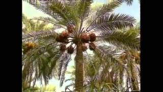 getlinkyoutube.com-Kappalukku pona machchan song by Kantalai yoosuf