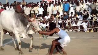 getlinkyoutube.com-2008 Seniour Category Bulls Show held at Prathamanandi, Nandyal