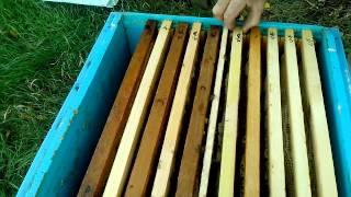 getlinkyoutube.com-изоляторы для пчелиных маток