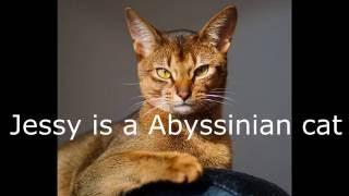 getlinkyoutube.com-Warrior Cat Facts #10